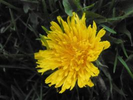 Bright Yellow by Child-of-Minerva