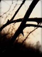 Thorns by 41010