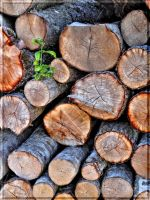 New life on the pile of firewood... by Yancis