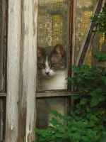 Home is where the cat is by Yanagi-no-Yume