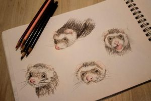 Ferrets by ContraxSarah