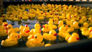 Too Many Ducks by Daystorm