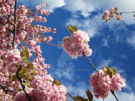 Cherry Blossoms III by BlackBloodCandle
