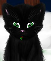 Hollyleaf by blackmuttofdoom