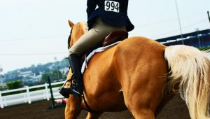 Horse Stock 60 by Blissfully-Blind