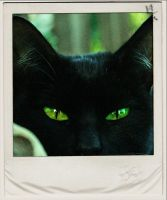 black CAT green EYES by mariaper