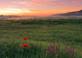 Summer morning by lica20