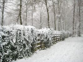 Snow Covered Fence by simfonic