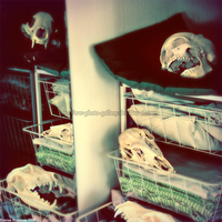 Skulls in my closet by ww-photo-gallery