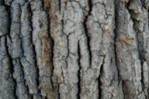 Tree Texture Stock 1 by mrwit