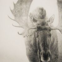 From the Mist by Misted-Dream