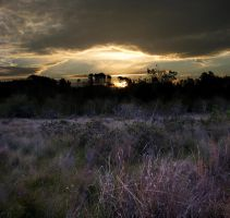 the heath 1 by reciprocated