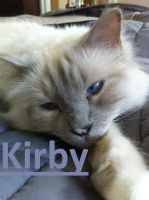 My cat kirby by snoopyisepic