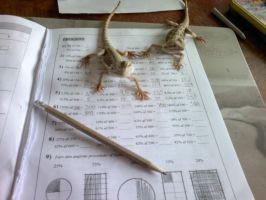 Bearded dragons = Math experts by XGorillazGirlX