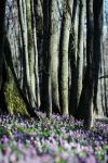 spring forest by Alexandra-Rei