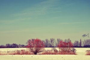 A sunny afternoon in Winter 3 by eyefish