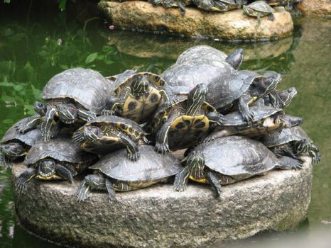 Turtles by Little-Endian