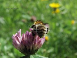 Bumblebee I. by Clergna