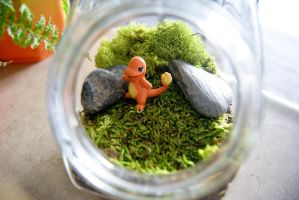 Pokemon Charmander Terrarium by MaForet