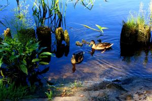 Ducks... by Peterdoesphotography