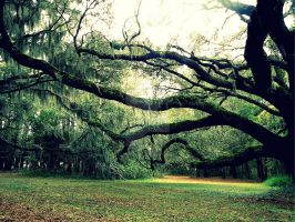 spanish moss by mechanical-pirate