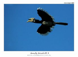 lonely hornbill 2 by warnaiman