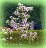 A tree with its blossom. by Bermiro