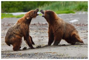 Battle at Katmai part II by Nate-Zeman