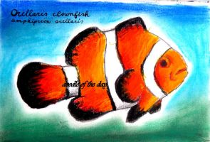 #238 Ocellaris clownfish by Doodle-of-the-day