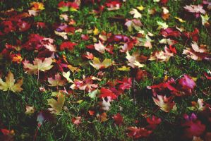 Fall colors on green grass by Linduzki