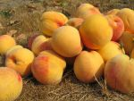 Peaches by ElizaTibbits-Stock