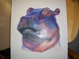 hippo by dragongurl913