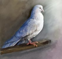 Dove study by E-leah