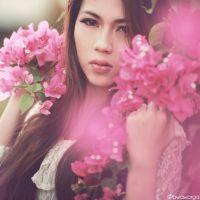 Pink Bougeville by bwaworga