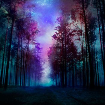 magical forest - night by BaxiaArt