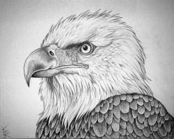 Bald Eagle Portrait by Techdrakonic