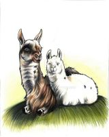 llama and cria by EatToast