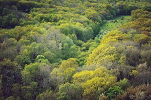 Forest from Above by Freggoboy