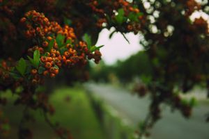 tree fruits by demor