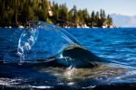 East Shore Tahoe Wave Art by sellsworth