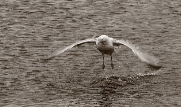 taking off by awjay