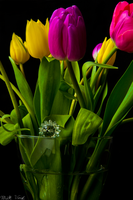 Tulips, a Gift to an Old Friend by Camel51