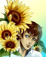 Sunflowers by Shomia