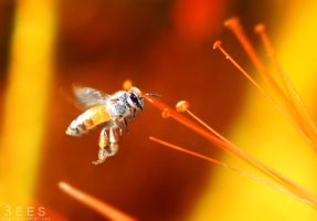 The golden bee ... by aoao2