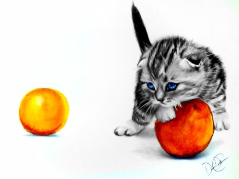 Kitten and Oranges by desiangel1