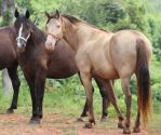 Multiple Horses 31 by MountainViewStock