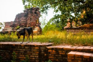 Thailand by SYSPLUCK