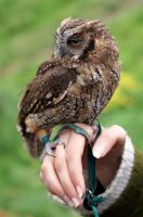 Tinny Owl by DSPHolthaus