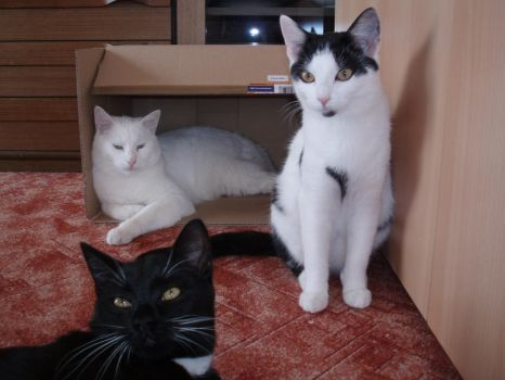 Lucius, Nikita and Ozzy by CatFromDream