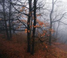 Winter fog in the forest III by VesnaRa-14